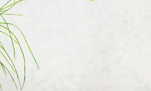 Exposición. Juan Falcón: Semillas de hoy